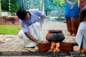 Thaipongal Festival